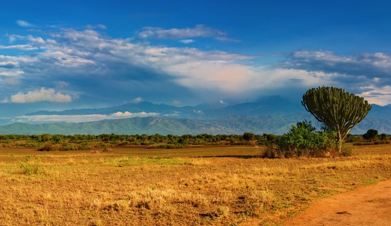 Blogger Outreach: Lessons from the African Savanna