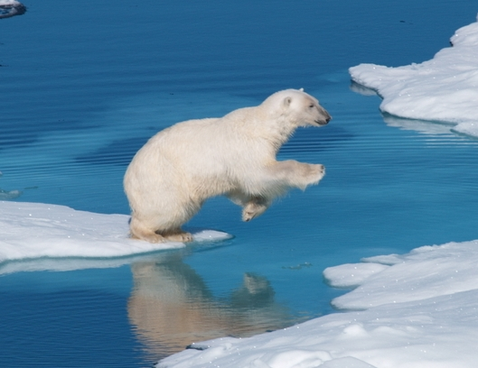 How a Grassroots Cancer Research Campaign Almost Saved the Polar Bears